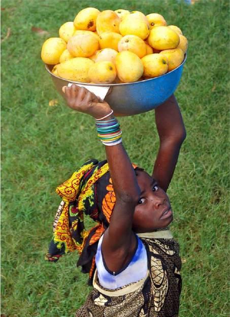Consorzio Lavoro Ambiente per il Mozambico